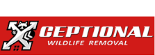 Pennsylvania Xceptional Wildlife Removal